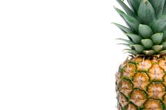 Ripe pineapple Stock Image