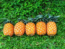 Ripe pineapple Royalty Free Stock Image