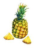 Ripe pineapple with green leaves. vector illustration