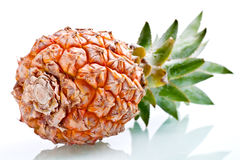 Ripe pineapple isolated. Ripe  juicy pineapple isolated close-up Stock Photos