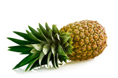 Ripe pineapple isolated Stock Photos