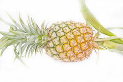 Ripe pineapple isolated Stock Photography
