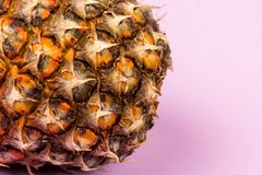 A ripe pineapple with a magenta background. Close-up of a ripe pineapple with room for text. The background color is magenta and the look is stylish Stock Images