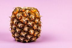 A ripe pineapple with a magenta background. Close-up of a ripe pineapple with room for text. The background color is magenta and the look is stylish Stock Image