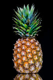 Ripe pineapple with reflection Stock Images