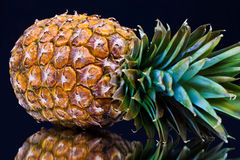 Ripe pineapple with reflection Royalty Free Stock Photo