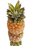 Ripe pineapple with reflection Stock Image