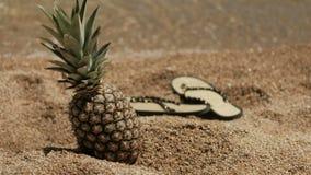 Ripe pineapple on sandy coast in sunny weather. stock video