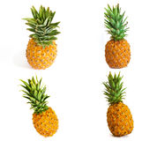 Ripe pineapple on white background, pineapple on isolated background. Juicy fruit with a bright feed Royalty Free Stock Images
