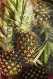 Ripe pineapples. Fresh ripe pineapples fruit in water splashes Stock Image
