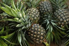 Ripe pineapples. On wooden table background Royalty Free Stock Photography