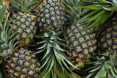 Ripe pineapples. On a wooden table background Royalty Free Stock Images