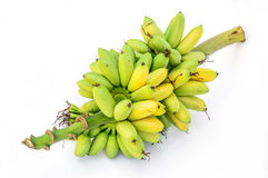Ripe Pisang Mas banana or Musa :Kluai Khai, famous small golden Stock Images