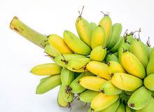 Ripe Pisang Mas banana or Musa :Kluai Khai, famous small golden Stock Photography