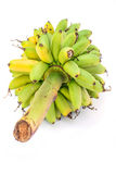 Ripe Pisang Mas banana or Musa :Kluai Khai, famous small golden Stock Photos