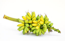 Ripe Pisang Mas banana or Musa :Kluai Khai, famous small golden Royalty Free Stock Photography