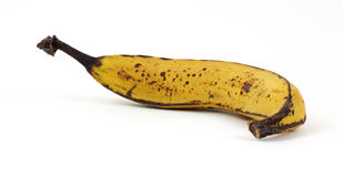 Ripe Plantain Cooking Banana Royalty Free Stock Photo