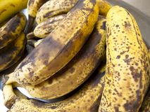 Ripe plantains Royalty Free Stock Images