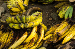 Ripe plantains banana with yellow colour on sale in Bogor traditional market photo taken in Bogor Indonesia Stock Images