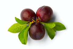 Ripe plum Stock Image