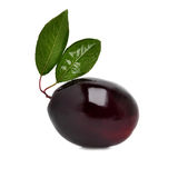 Ripe plum Stock Photography