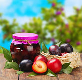 Ripe Plum And Fresh Canned Stock Images