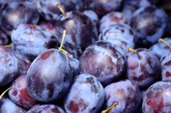 Ripe plum in the market Royalty Free Stock Photos