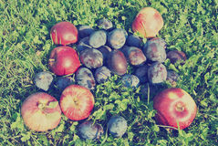 Ripe plums and apples in an orchard, rural vintage concept Royalty Free Stock Photos