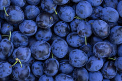 Ripe Plums Background Royalty Free Stock Image