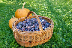 Ripe plums in basket Stock Photos