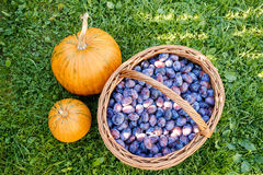 Ripe plums in basket Royalty Free Stock Photos