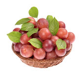 Ripe plums Stock Photo