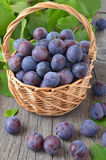 Ripe plums in basket Royalty Free Stock Image