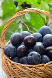 Ripe plums in basket Stock Photography
