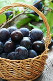 Ripe plums in basket Royalty Free Stock Photography