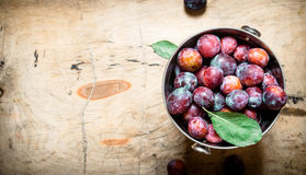 Ripe plums in the bucket. On wooden background Royalty Free Stock Images