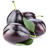 Ripe plums isolated Stock Photography