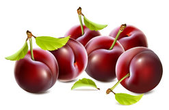 Ripe plums with leaves Royalty Free Stock Image