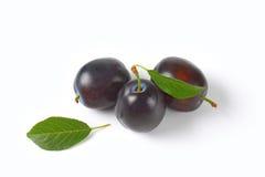 Ripe plums stock photos