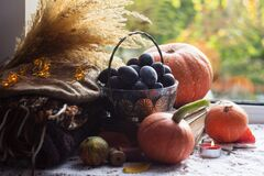 Ripe plums in a vintage vase on old books, orange pumpkins, warm clothes, a candle and lights are on the windowsill. Cozy autumn
