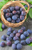 Ripe plums in a wicker basket Stock Photos