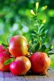 Ripe Pomegranates Stock Photography