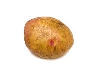 Ripe potato. Ripe rough potato. Isolated on white background Royalty Free Stock Images