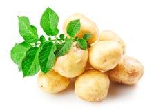 Ripe potatoes Royalty Free Stock Image