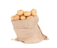 Ripe potatoes in burlap sack. Royalty Free Stock Photo