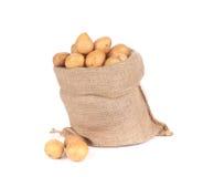Ripe potatoes in burlap sack. royalty free stock images