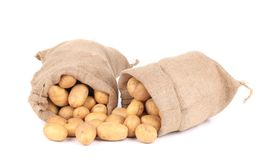 Ripe potatoes in sacks. stock photos