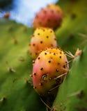 Ripe prickly pears Stock Photo