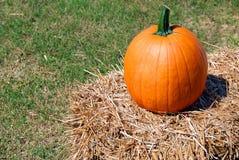 Ripe pumpkin Stock Photos