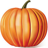 Ripe Pumpkin stock illustration